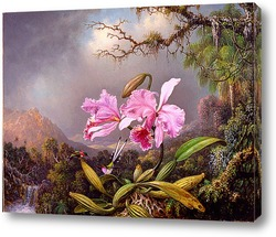 Постер Проучване на Орхидеи