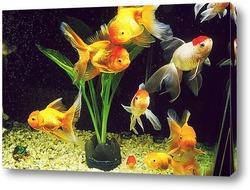 Постер Fish010