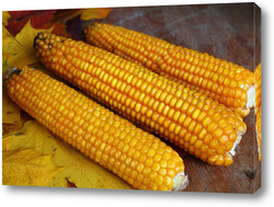 Постер золотая  кукуруза
