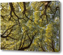 Постер Кроны деревьев в лесу