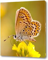 Постер Бабочка на жёлтом цветке