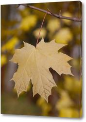 Постер Красивый лист дерево на ветке