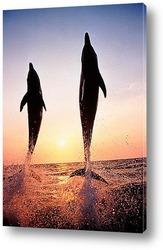 Постер Dolphin064