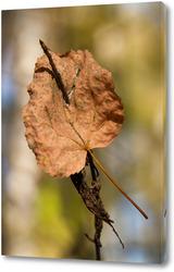Постер Лист дерева на ветке