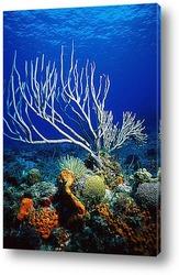 Постер Coral005