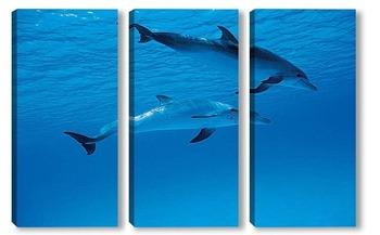 Модульная картина Dolphin017