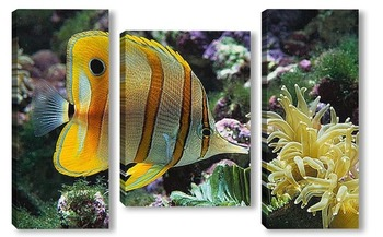 Модульная картина Fish049