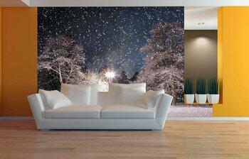 освещенный лес зимой